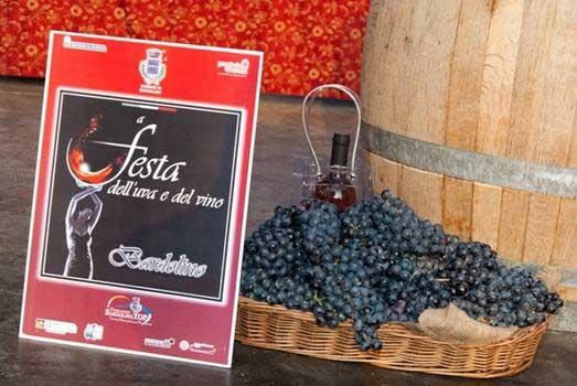 פסטיבל היין של ברדולינו - צילום: www.bardolinotop.it