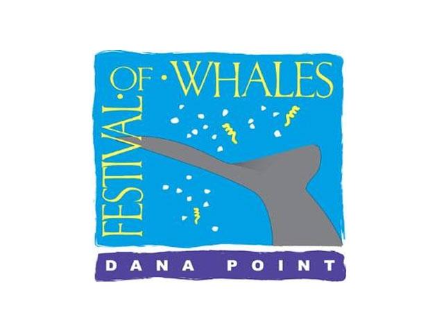 פסטיבל הלווייתנים של דנה פוינט - צילום:  festivalofwhales.com