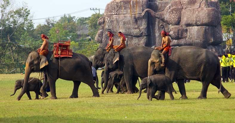 פסטיבל הפילים בסורין - צילום: freebeerforyorky.com