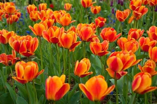 פרח הצבעוני - צילום: Johninportland