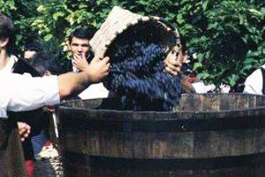חגיגות בציר ענבי הריוחה - Photo by: www.spain.info