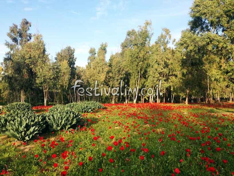 יער שוקדה - פסטיבל דרום אדום - צילום: פסטיבלים וקרנבלים בעולם