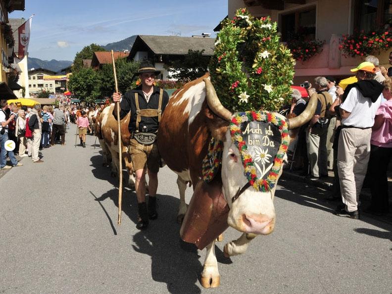 פסטיבל שיבת הבקר למחסות החורף - צילום: www.alpbachtal.at