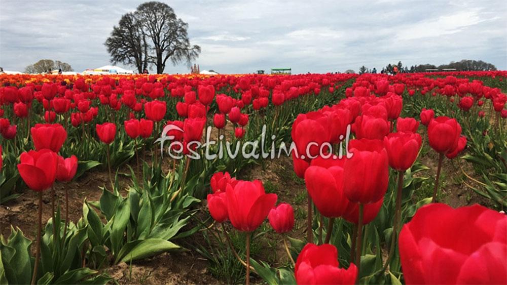 פסטיבל הצבעונים של חוות וודנשאו אורגון - צילום באדיבות: © CarniFest Online
